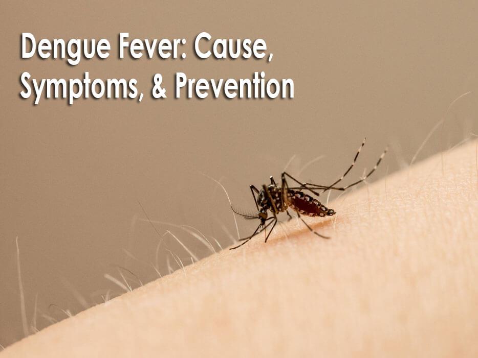 Dengue Fever: Cause, Symptoms, & Prevention